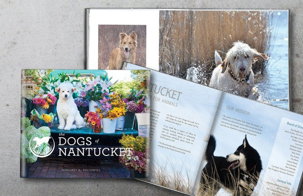 Dogs of Nantucket